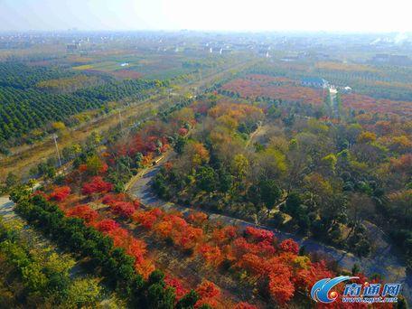 三农网 资讯 农业新闻 今日头条 03 正文    如今生态园精品苗木