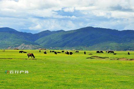 香格里拉依拉草原,纳帕海最好的季节草原风光